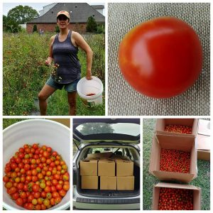 Makeover My Leftover Tomato Harvest