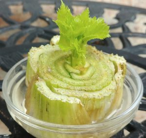 Growing Celery Bottoms