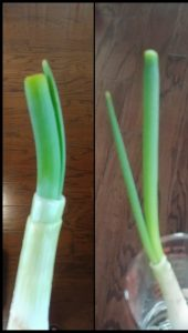 Green Onion Madness